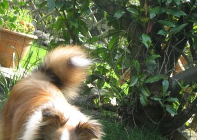foto`s Bo de liefste hond 079