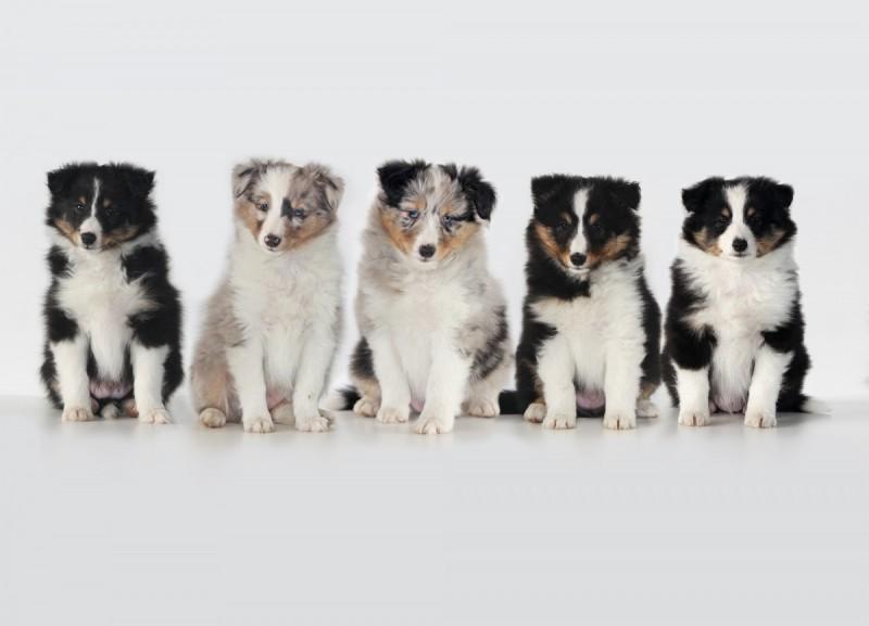 pups-klein